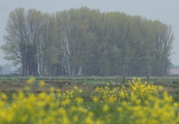 De Wilck, 29 April 2012