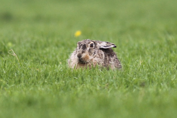 Hare, 24 October 2012