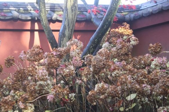 Japanese garden, 11 November 2012