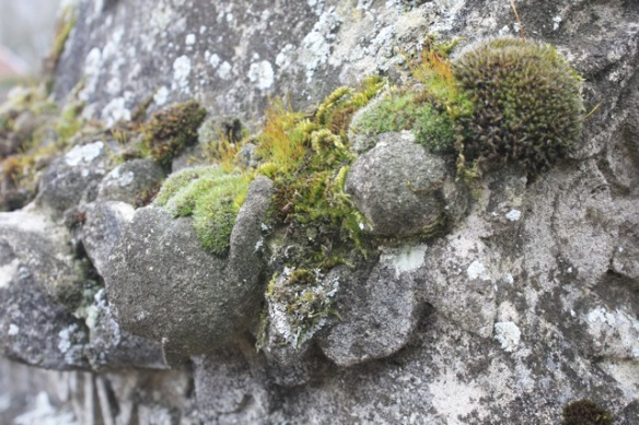 Moss on a tombstone in a Lac du Der village