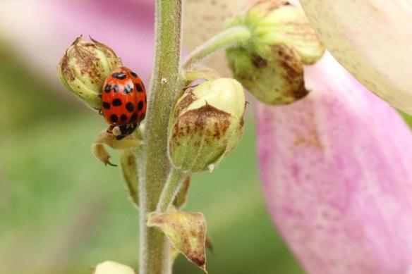 Ladybird, 23 June 2013