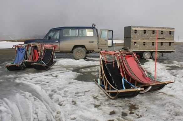 Trailer with dog cages, Svalbard, 6 June 2013