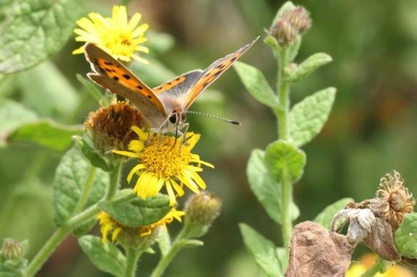 Butterfly, Italy, 13 September 2013