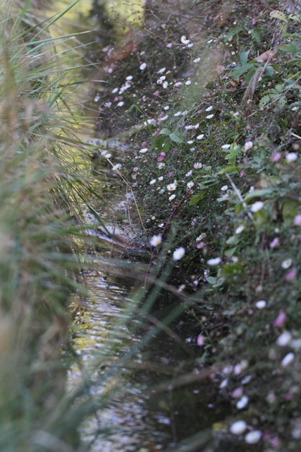 Flowers near irrigation canal, Italy, 19 September 2013