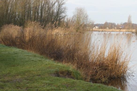 Meeslouwer lake, 23 February 2014