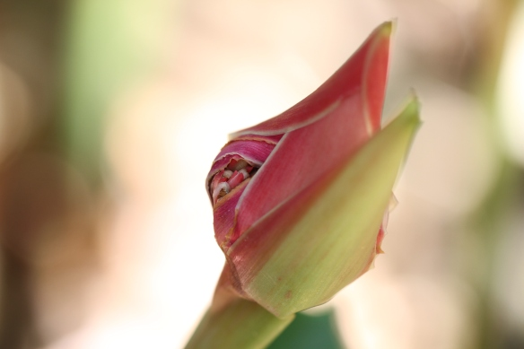 Flower, Alajuela