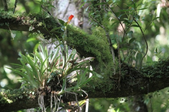 Costa Rica cloud forest and epiphytes, 18 March 2014
