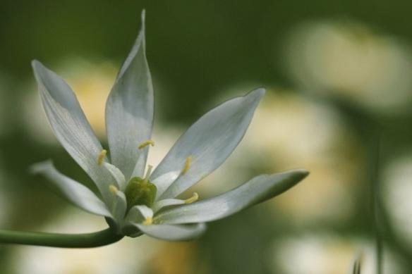 Flower, 25 April 2014
