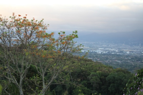 Flowering tree, Costa Rica, 14 March 2014