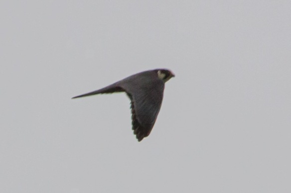 Hobby flying, 21 April 2014