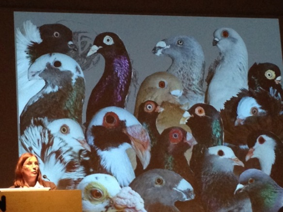 Katrina van Grouw, domestic pigeons, 25 May 2014