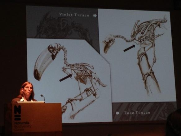 Katrina van Grouw, toco toucan and violet touraco, 25 May 2014