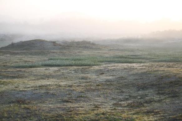 Meijendel dunes, 17 May 2014