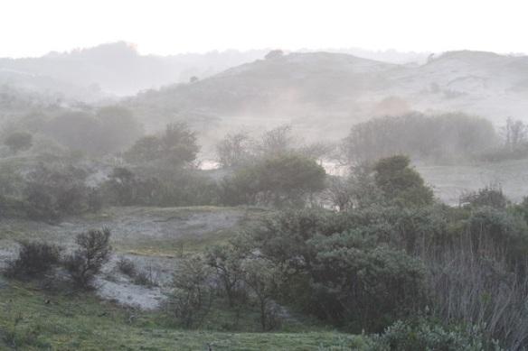 Meijendel fog, 17 May 2014