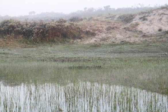 Meijendel lake, 17 May 2014