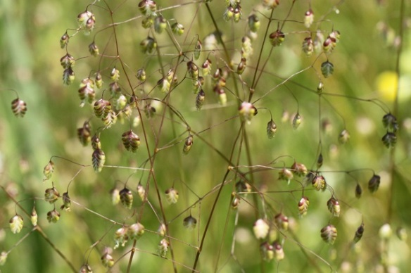 Dodder-grass, on 9 June 2014