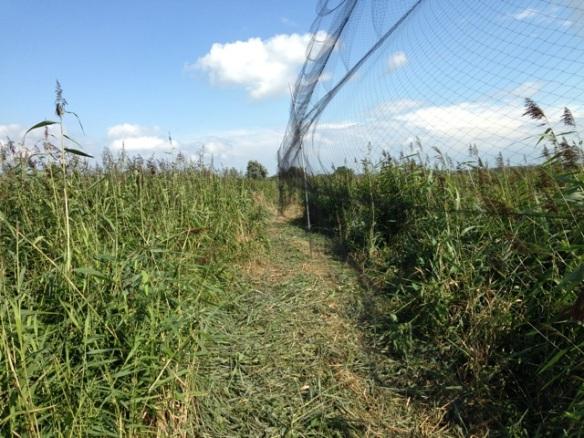 Bird ringers' net, Oostvaardersplassen, 23 August 2014