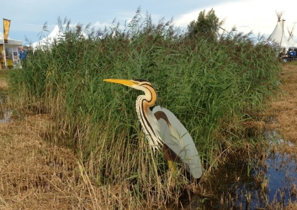 Purple heron, 23 August 2013