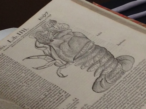 Lobster, in Gessner's book, Naturalis, 19 October 2014