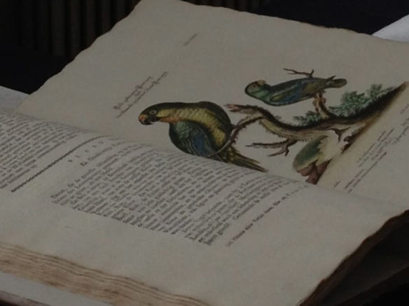 Mark Catesby, parrots, Naturalis, 19 October 2014