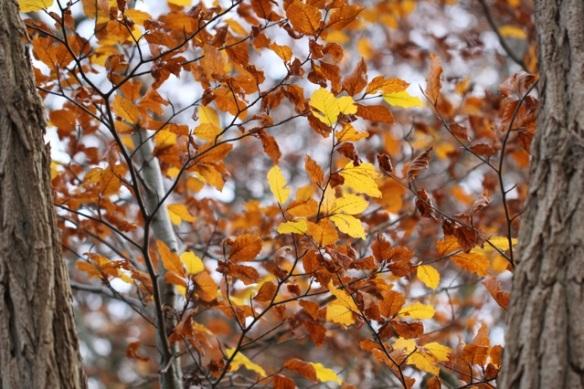 Autumn leaves, 23 November 2014