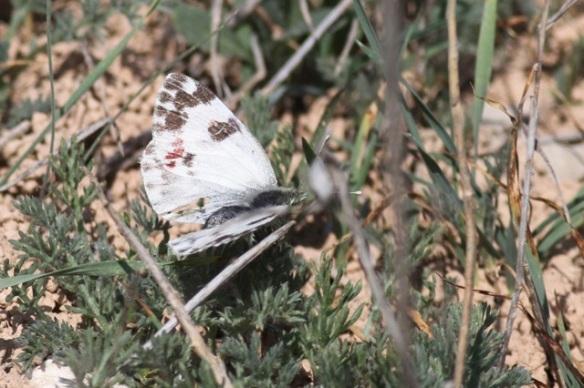 Butterfly, Spain, 3 November 2014