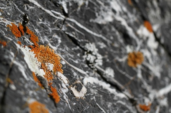 Lichen, 1 November 2014