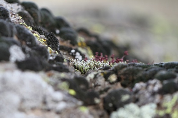 Lichen, Portalet pass, 1 November 2014