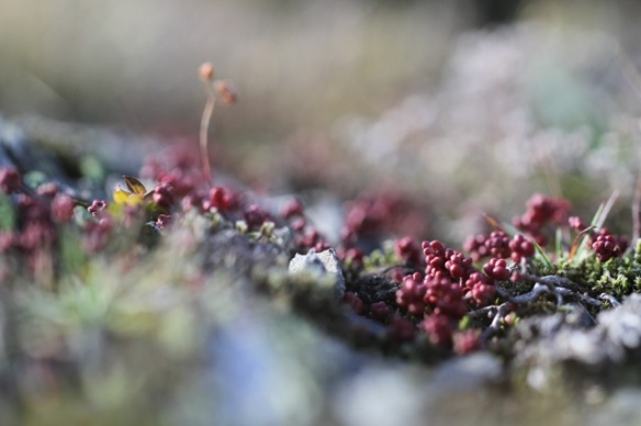 Lichen, Portalet pass, Aragon, 1 November 2014