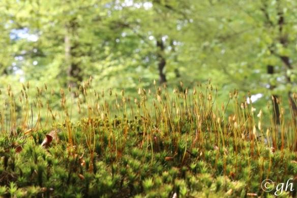Moss, 7 May 2015