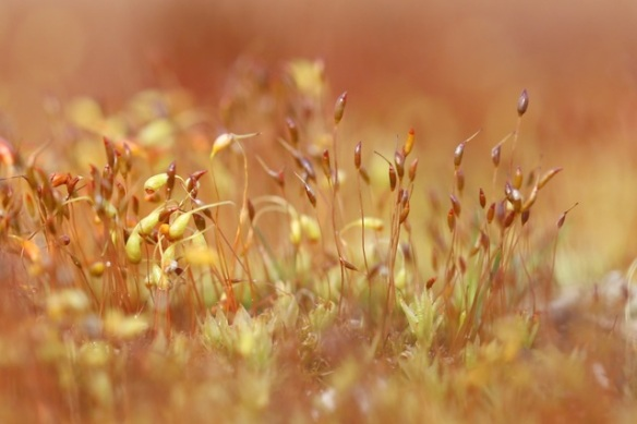 Moss, Kloosterveld, on 3 May 2015