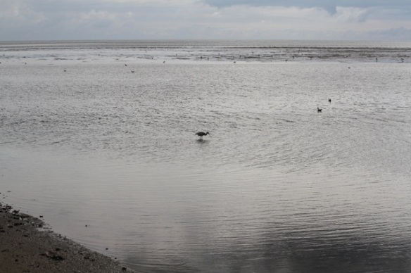 Spoonbill in Wadden Sea, 28 September 2015
