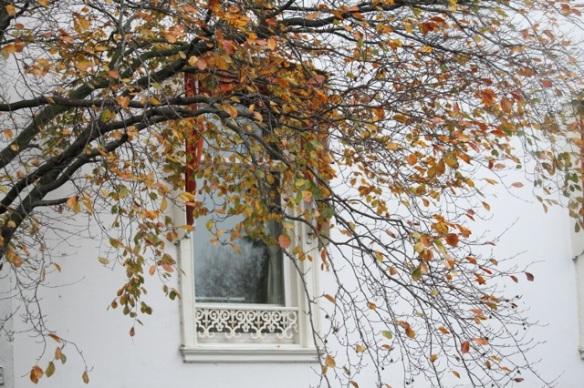 Autumn leaves, 7 November 2015