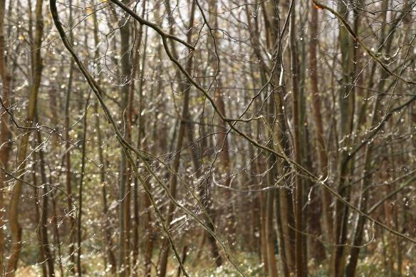 Trees in De Horsten