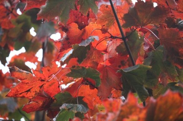 Rembrandtpark leaves, 7 November 2015