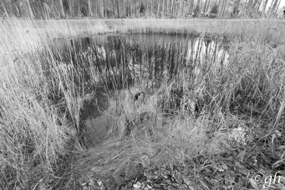 Gooilust pond, 26 December 2015