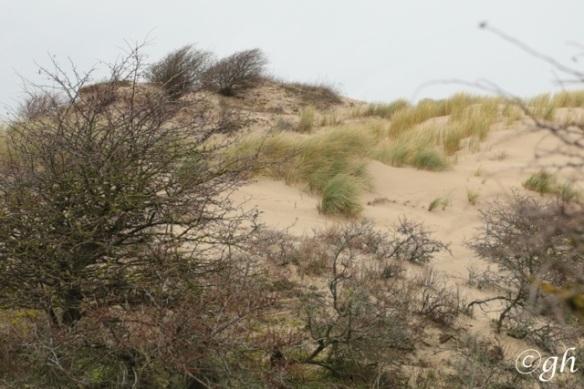 Meijendel sand dunes, 19 December 2015