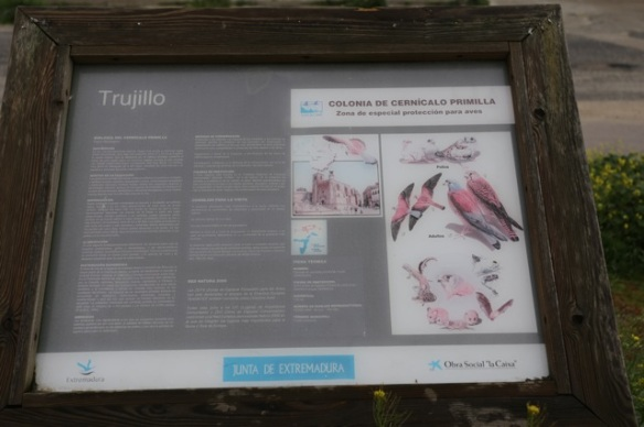 Trujillo, lesser kestrels sign, 11 April 2016