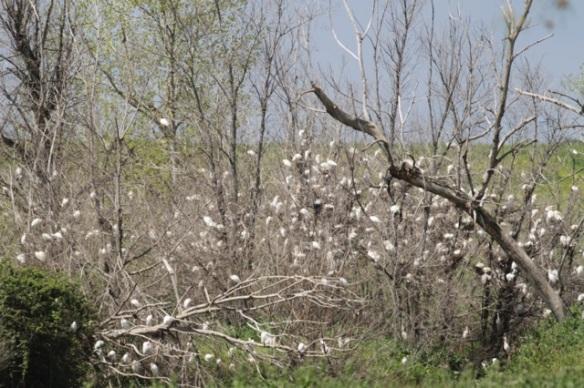 Nesting colony, 21 April 2016