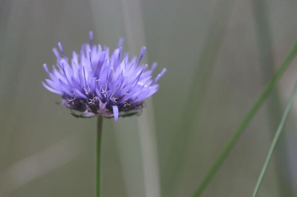 Flower, 8 July 2016