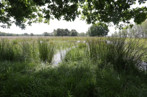 Huis ter Heide, 10 July 2016