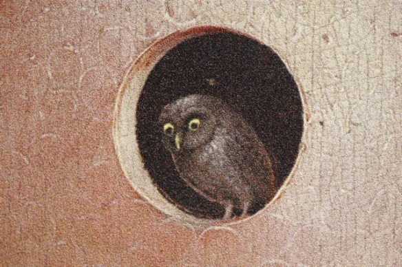 Little owl, Bosch, Garden of earthly delights