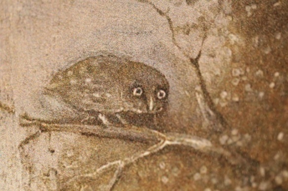 Little owl, Hieronymus Bosch