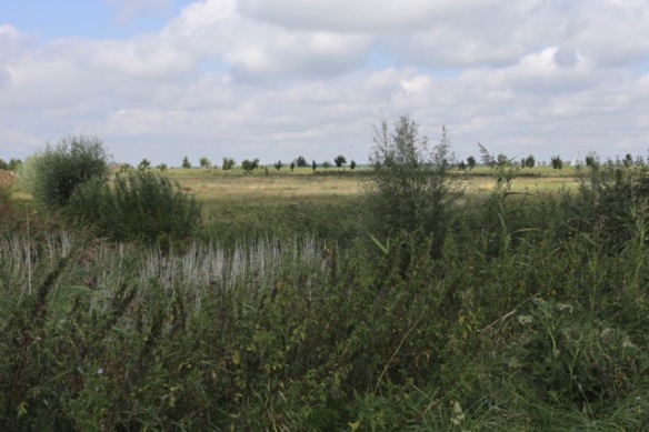 Tiengemeten landscape on 11 September 2016