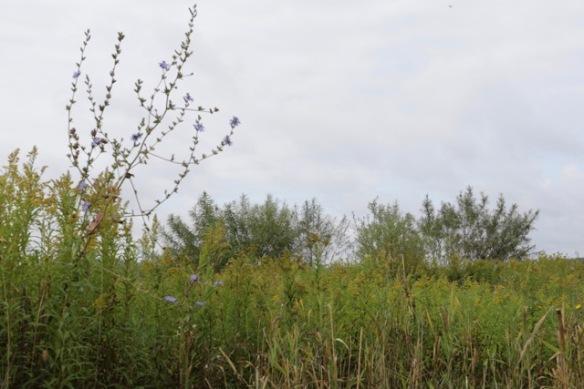Tiengemeten plants, 11 September 2016