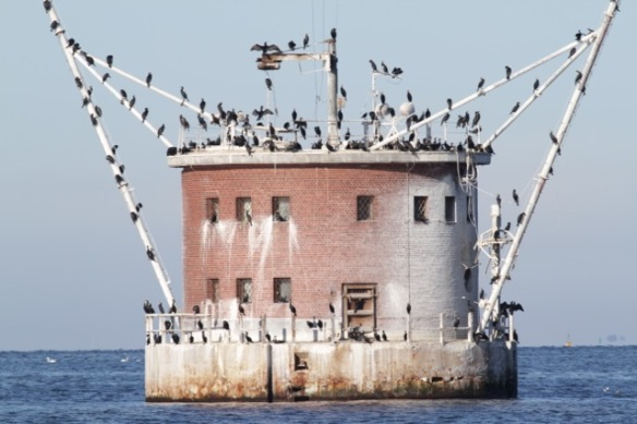 Cormorants on artificial island