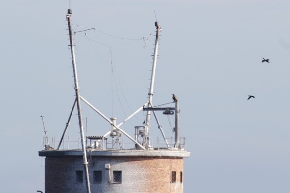 Sea eagle sits, 3 October 2016