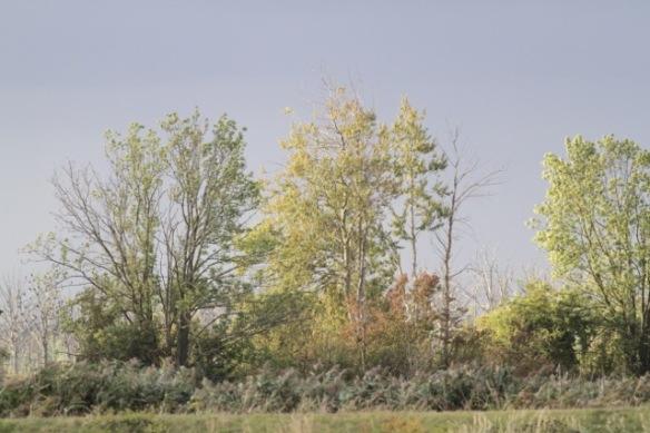 Trees, 4 October 2016