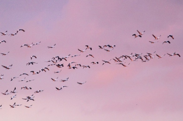 Yet more cranes