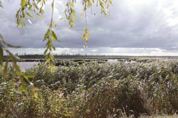 Wetland near Kamp, 4 October 2016